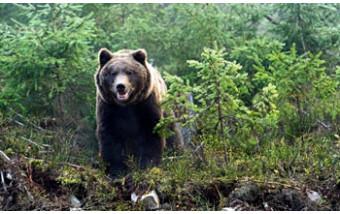 Что делать, если встретил дикого зверя в лесу